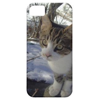 Curious Cat iPhone SE/5/5s Case
