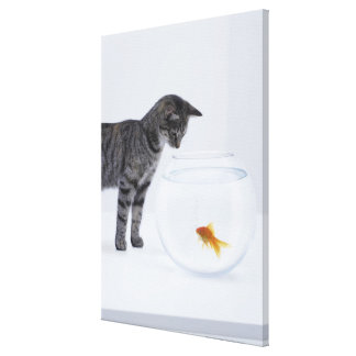 Curious cat watching goldfish in fishbowl stretched canvas print