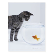 Curious cat watching goldfish in fishbowl postcard