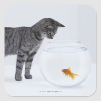 Curious cat watching goldfish in fishbowl square sticker