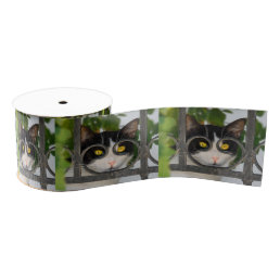 Curious Cat with Spectacles Frame Funny Pet Photo Grosgrain Ribbon