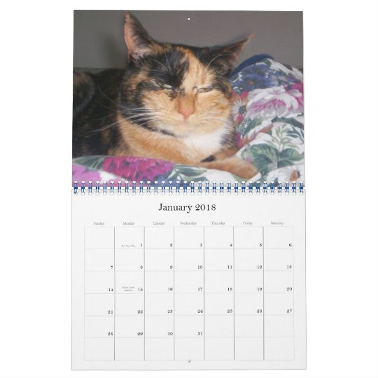 Curious Cats in everyday life - Customized Calendar