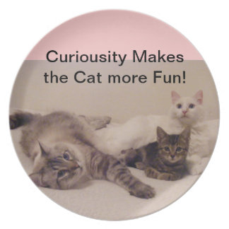 curious cats plate