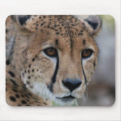 Curious Cheetah Mousepad