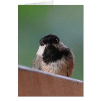 Curious Chickadee Card