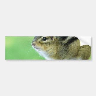 Curious Chipmunk  Bumper Sticker Car Bumper Sticker