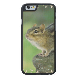 Curious Chipmunk Carved® Maple iPhone 6 Case