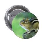 Curious Chipmunk  Pin