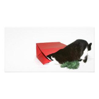 Curious Christmas cat Card