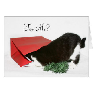 Curious Christmas cat Card
