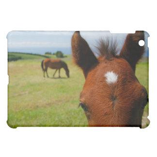 Curious colt iPad mini covers