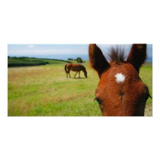 Curious colt photo card