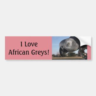 Curious Congo African Grey Parrot Bumper Sticker