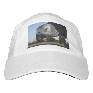 Curious Congo African Grey Parrot Headsweats Hat