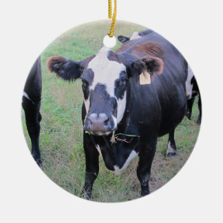 Curious Cow Ceramic Ornament