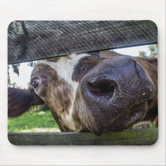Curious Cow Mouse Pad