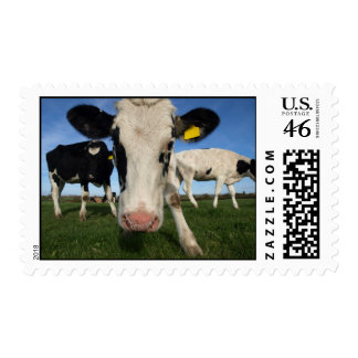 Curious Cow Postage