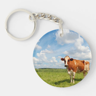 Curious cow standing on meadow. key chains