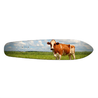 Curious cow standing on meadow. skate board decks
