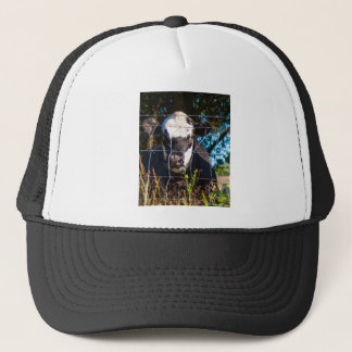 Curious Cow Trucker Hat