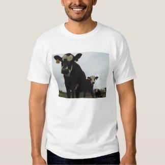 Curious Cows 2 Tee
