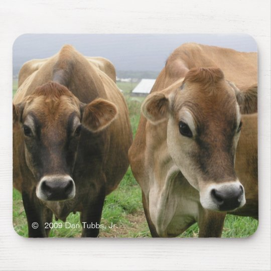 Curious cows mouse pad