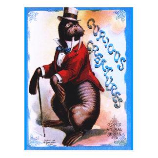 Curious Creatures - Seal Postcard