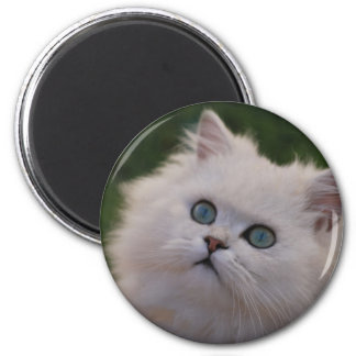 Curious cute white kitten 2 inch round magnet