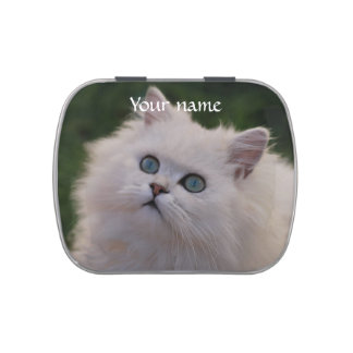 Curious cute white kitten jelly belly tin