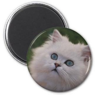 Curious cute white kitten magnet