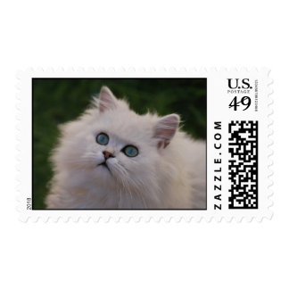 Curious cute white kitten postage