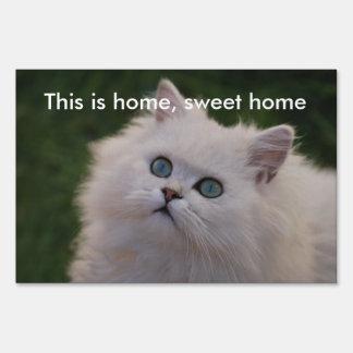 Curious cute white kitten sign