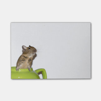 Curious Degu in a Green Teapot Post-it® Notes