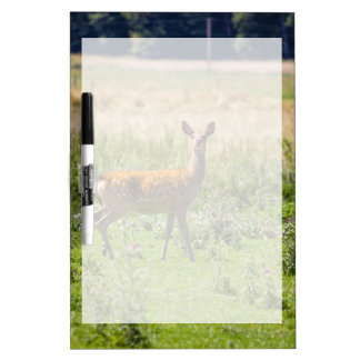 Curious Doe In A Grass Meadow Animal Photo Dry-Erase Boards