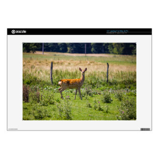 Curious Doe In A Grass Meadow, Animal Photo Laptop Decal