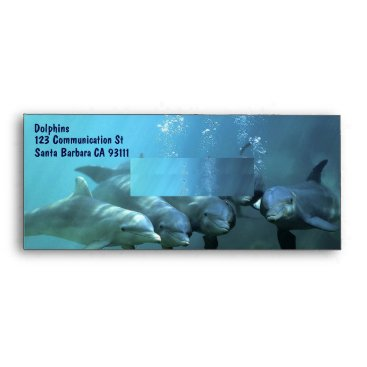 Professional Business Curious Dolphins Envelope