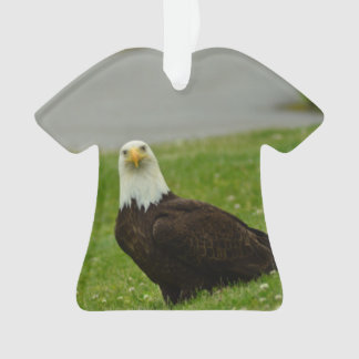 Curious Eagle Ornament