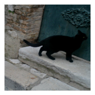 Curious French Black Cat Nice France Print Posters