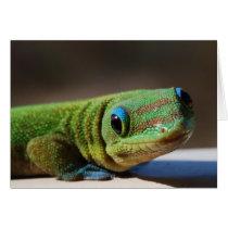 Curious Gecko
