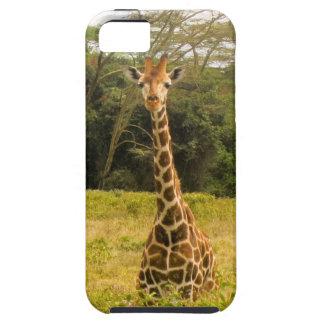 Curious Giraffe iPhone 5/5S Cases