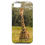 Curious Giraffe iPhone 5/5S Cases