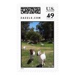 Curious Goats Art Stamp