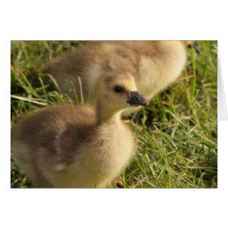 curious gosling card