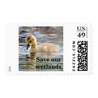 Curious Gosling Stamp