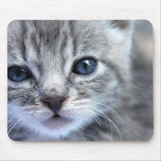 Curious Grey Kitten Mouse Pad