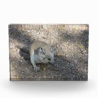 Curious Ground Squirrel Acrylic Award