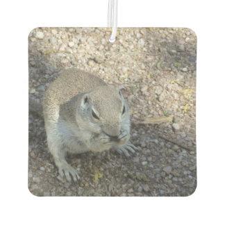 Curious Ground Squirrel Car Air Freshener