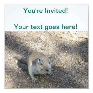 Curious Ground Squirrel Card