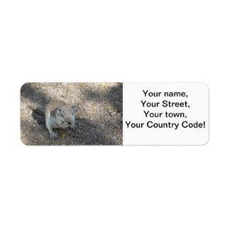 Curious Ground Squirrel Return Address Label