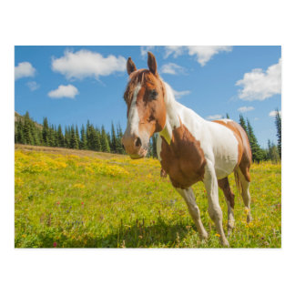 Curious horse in an alpine meadow in summer postcard